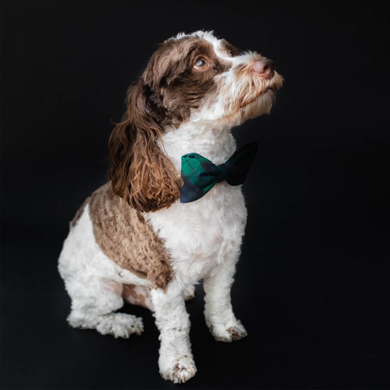 Blackwatch Plaid Bow Tie Collar from The Foggy Dog