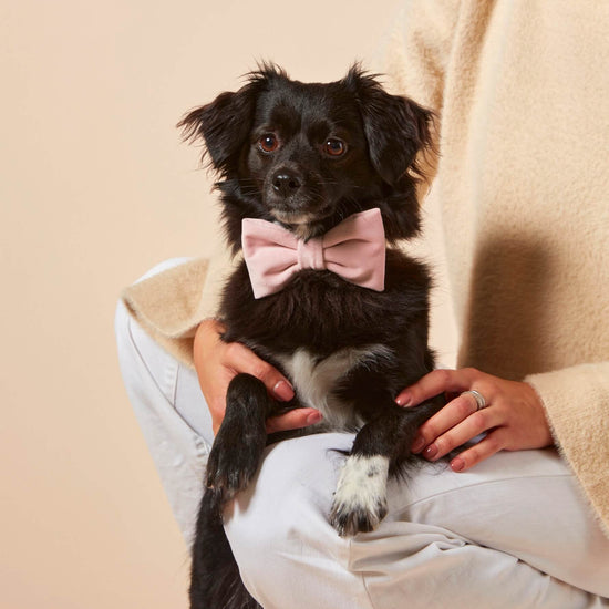 Blush Pink Velvet Dog Bow Tie from The Foggy Dog