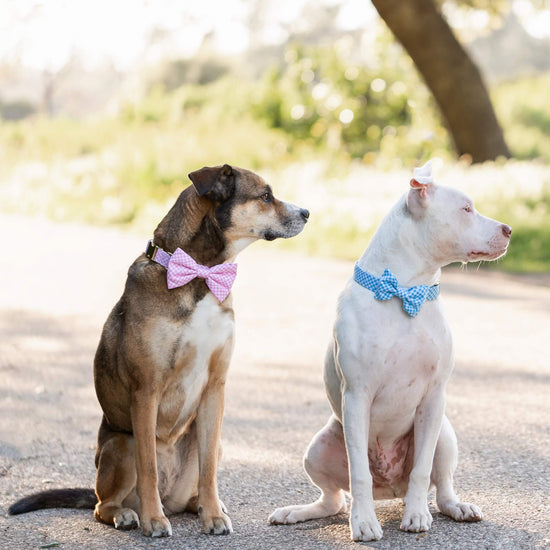 Carnation Gingham Dog Bow Tie from The Foggy Dog