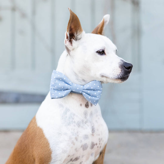 Chambray Dots Bow Tie Collar from The Foggy Dog