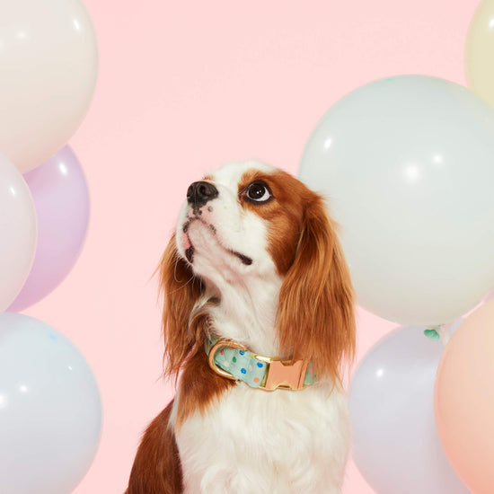 Confetti Dots Dog Collar from The Foggy Dog