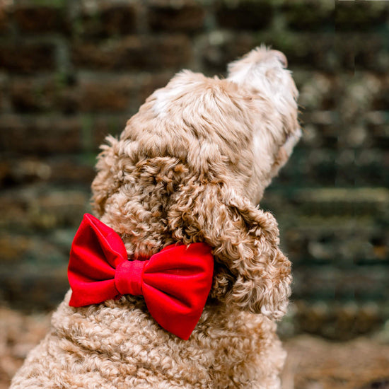 Cranberry Velvet Bow Tie Collar from The Foggy Dog