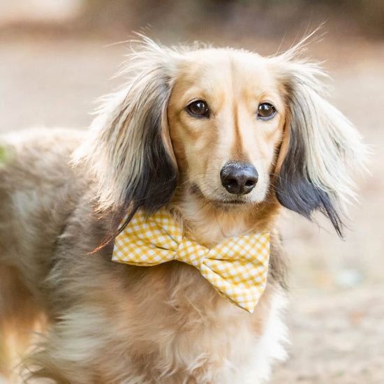 Daffodil Gingham Dog Bow Tie from The Foggy Dog