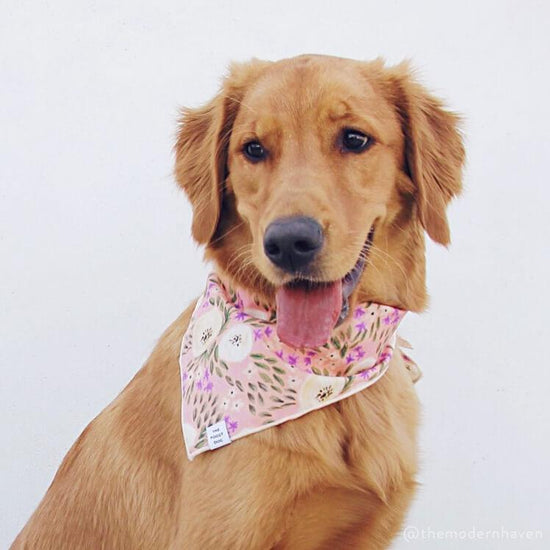Harper Floral Dog Bandana from The Foggy Dog