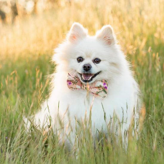 Harper Floral Dog Bow Tie from The Foggy Dog