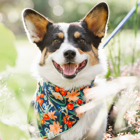 Inky Blooms Dog Bandana from The Foggy Dog