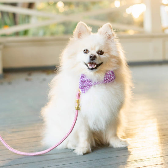 Lavender Gingham Bow Tie Collar from The Foggy Dog