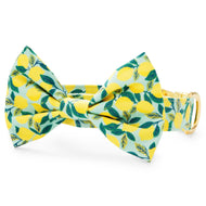Lemon Zest Bow Tie Collar from The Foggy Dog