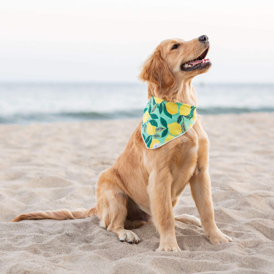 Lemon Zest Dog Bandana from The Foggy Dog