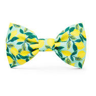 Lemon Zest Dog Bow Tie from The Foggy Dog