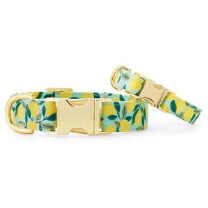 Lemon Zest Dog Collar from The Foggy Dog