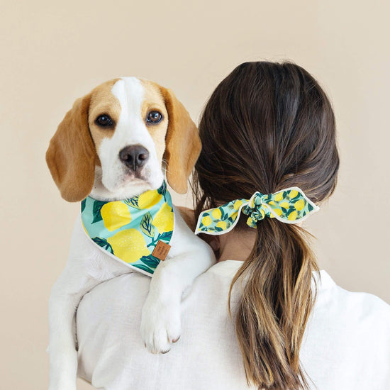 Lemon Zest Scrunchie and Bandana Set from The Foggy Dog