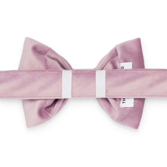 Lilac Velvet Bow Tie Collar from The Foggy Dog