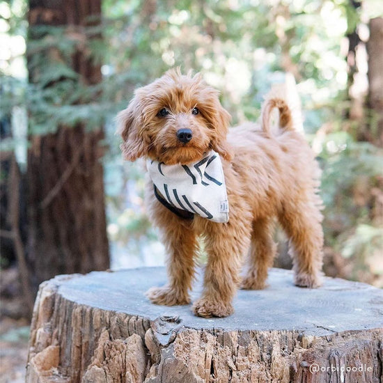 Modern Mud Cloth Natural Dog Bandana from The Foggy Dog
