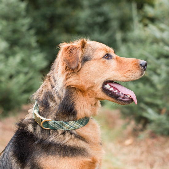 Mossy Plaid Dog Collar from The Foggy Dog
