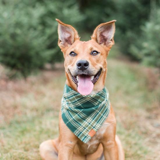 Mossy Plaid Flannel Dog Bandana from The Foggy Dog