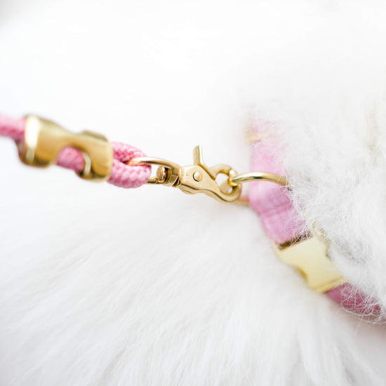 Orchid Dog Collar from The Foggy Dog