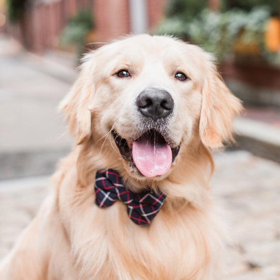 Oxford Plaid Dog Bow Tie from The Foggy Dog