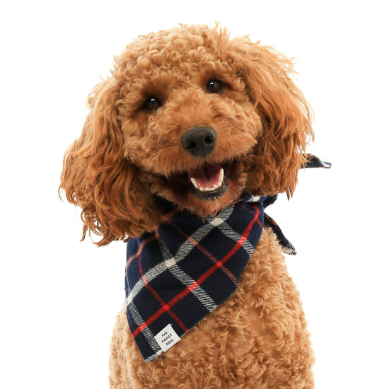 Oxford Plaid Flannel Dog Bandana from The Foggy Dog