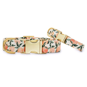 Peaches and Cream Dog Collar from The Foggy Dog
