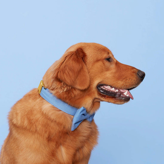 Periwinkle Bow Tie Collar from The Foggy Dog