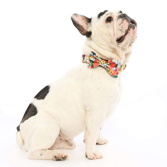 Petite Petals Dog Bow Tie from The Foggy Dog