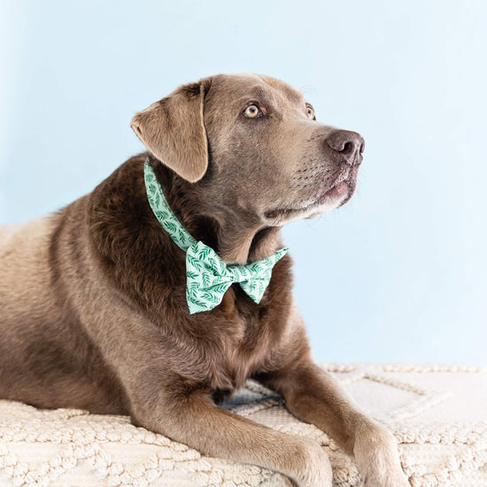 Plant Lady Bow Tie Collar from The Foggy Dog