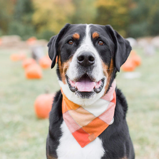 Pumpkin Spice Flannel Dog Bandana from The Foggy Dog