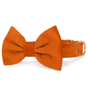 Pumpkin Velvet Bow Tie Collar from The Foggy Dog