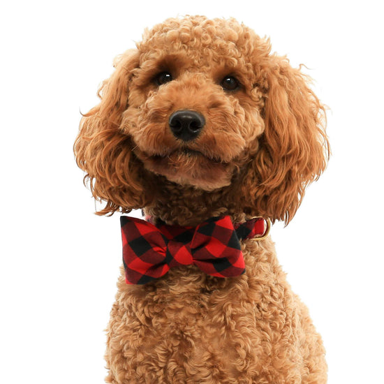 Red and Black Buffalo Check Dog Bow Tie from The Foggy Dog