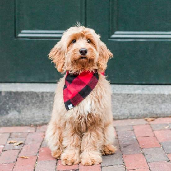 Red and Black Check Flannel Dog Bandana from The Foggy Dog