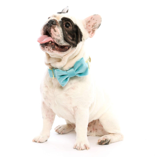 Robin's Egg Velvet Bow Tie Collar from The Foggy Dog