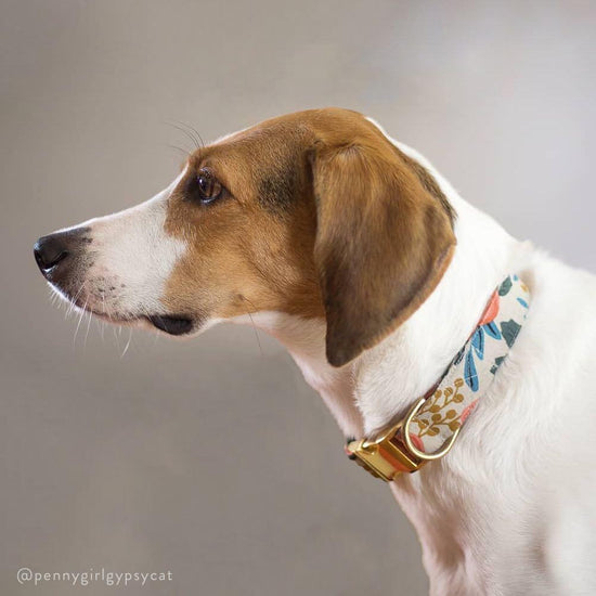Rosa Floral Natural Dog Collar from The Foggy Dog