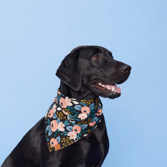 Rosa Floral Peach Dog Bandana from The Foggy Dog