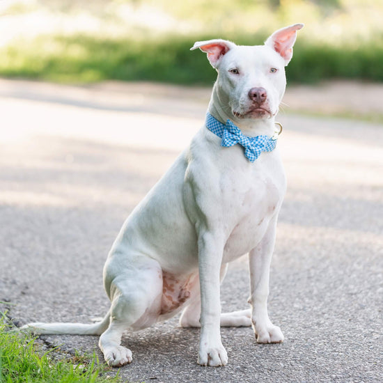 Sky Blue Gingham Bow Tie Collar from The Foggy Dog