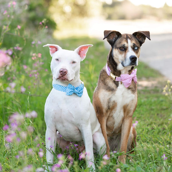 Sky Blue Gingham Dog Bow Tie from The Foggy Dog