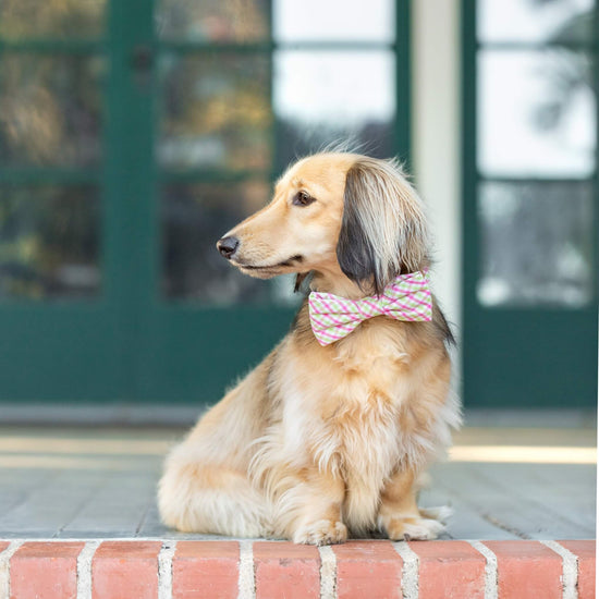Spring Plaid Bow Tie Collar from The Foggy Dog