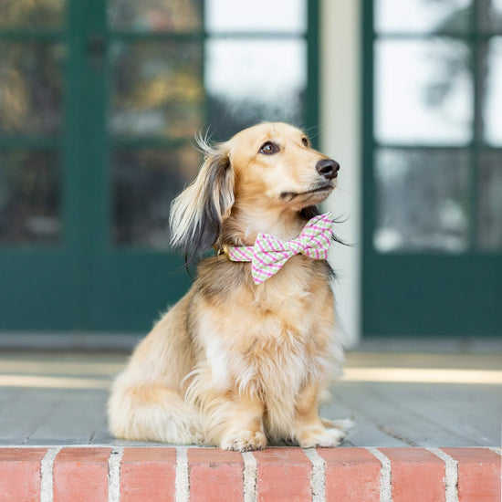 Spring Plaid Dog Bow Tie from The Foggy Dog