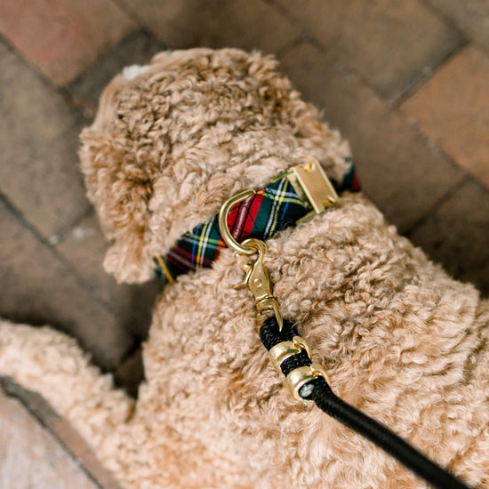 Stewart Plaid Dog Collar from The Foggy Dog