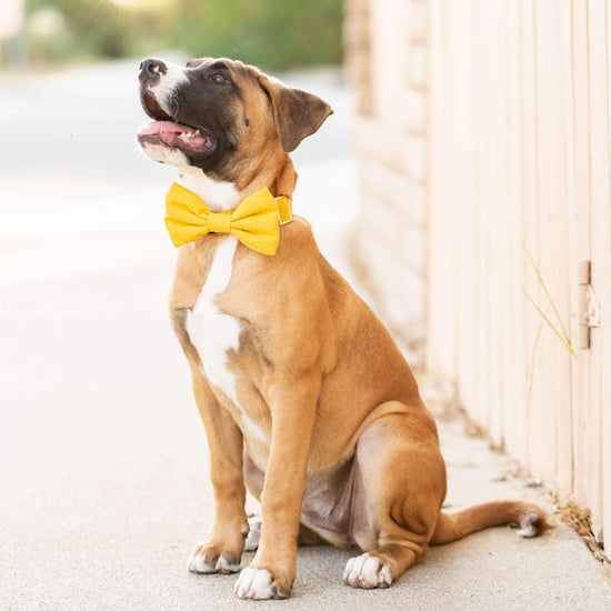 Sunflower Bow Tie Collar from The Foggy Dog