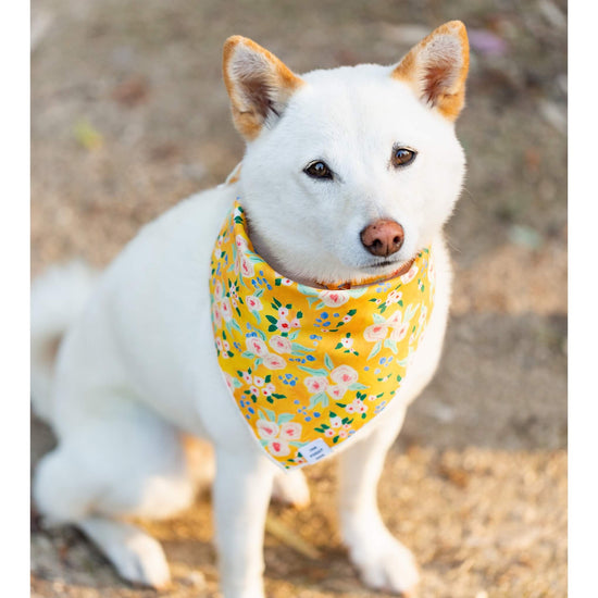 Sunny Days Dog Bandana from The Foggy Dog