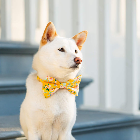 Sunny Days Dog Bow Tie from The Foggy Dog