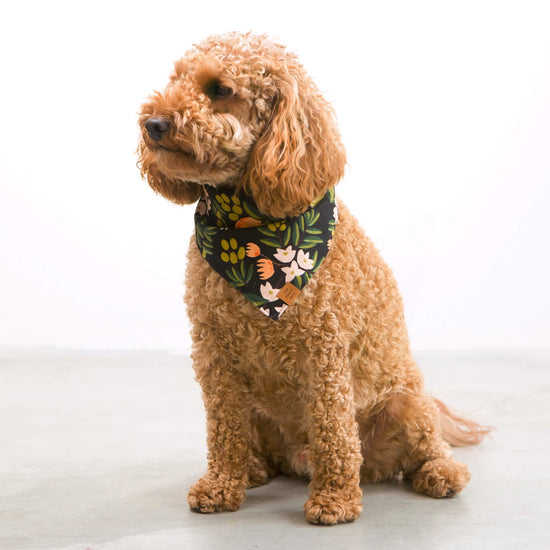 Valencia Midnight Dog Bandana from The Foggy Dog