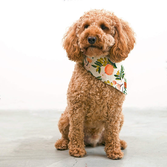 Valencia Natural Dog Bandana from The Foggy Dog