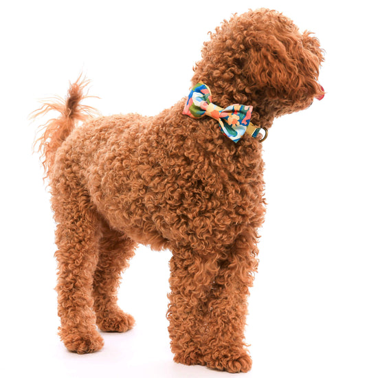 Wildflower Bow Tie Collar from The Foggy Dog