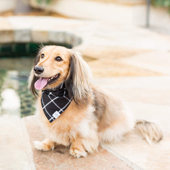 Windowpane Check Black Dog Bandana (Reversible) from The Foggy Dog