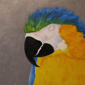 Blue & Gold Macaw E-book