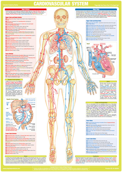 Anatomy & Medical Charts