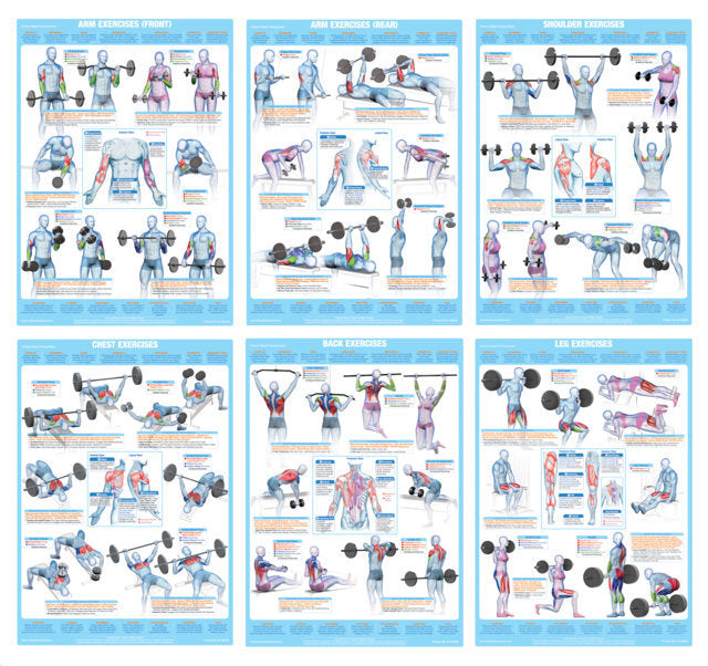 Weight Training Bodybuilding And Muscle Anatomy Poster Chart Chartex Ltd