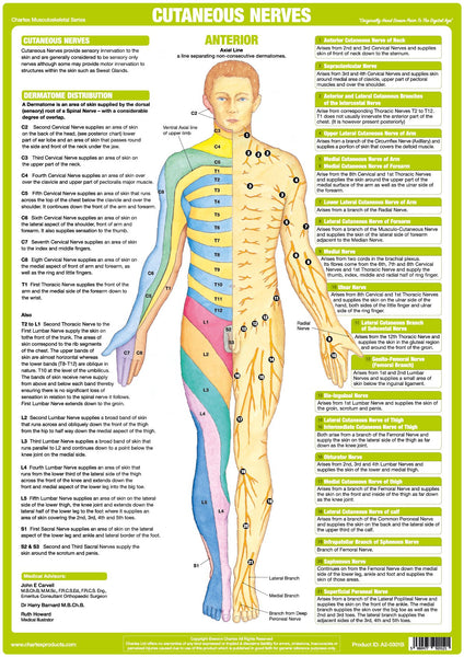 Nerve Anatomy Chart - Cutaneous Anterior